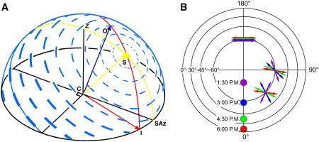 SF3 polarizare soare