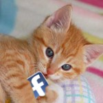 kitten-and-facebook_email
