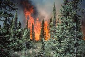 boreal forest incendy