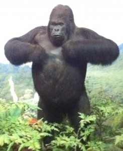 gorilla thump