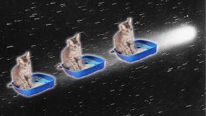160728 cat pee 2