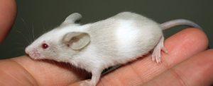 160809 ocd mice