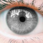 161130-gray-eye