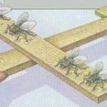 Împăratul zburător al muștelor