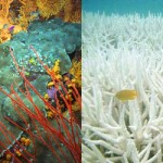 Știi de ce revii la coral?