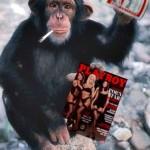 Instinct primat