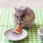 3030373-poster-p-1-hamsters-eating-pizza