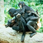 Planeta maimuțelor prietenoase
