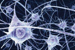 160921-sinapse